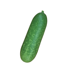 Hairy gourd