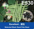 e530 rgb-01
