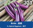 e323-rgb-01